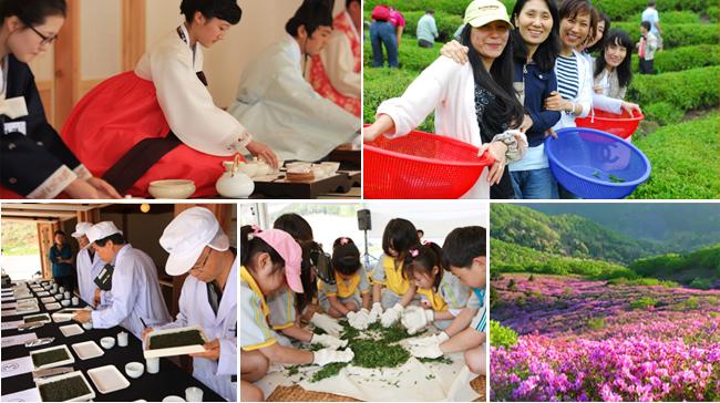 Thả hồn với cánh đồng trà Boseong tươi mát