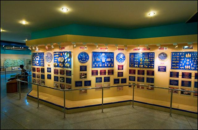 Bảo tàng sò biển1