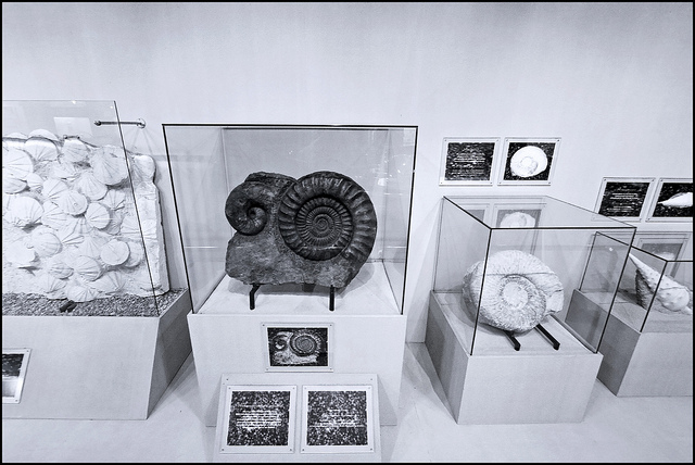 bảo tàng sò