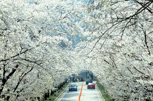 Đường Yunjingno