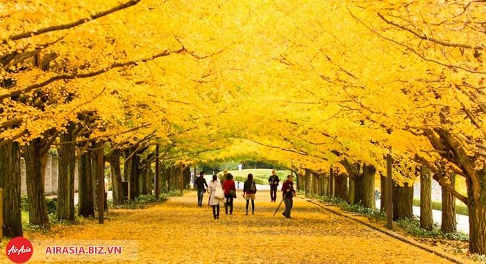 Mùa thu đảo Nami Hàn Quốc