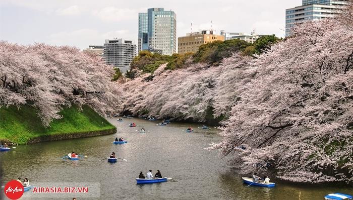 Ngắm hoa anh đào ở Chidorigafuchi