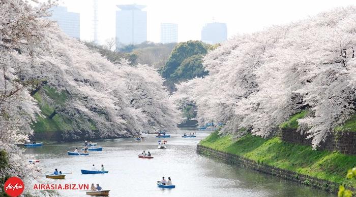 Lễ hội hoa anh đào Ueno Park