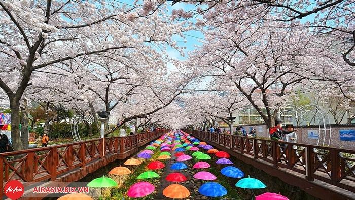 Lễ hội hoa Jinhae Gunhangje ở Busan
